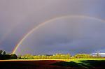 Rainbow striking row of trees in field