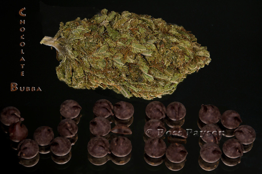 Chocolate Bubba nug photo shot in a professional photography studio.