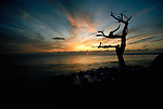 Sunset painted clouds stretch across the sky behind a silhouetted tree in Monterey bay, California.
