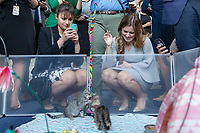 Capitol Hill staffers play with kittens in the Rayburn House Office Building on Capitol Hill in Washington, DC during an event in support of the 'Kitten Act' which aims to stop testing by the United States Department of Agriculture on Kittens in Washington, DC on June 7, 2018. <br /> CAP/MPI/RS<br /> &copy;RS/MPI/Capital Pictures