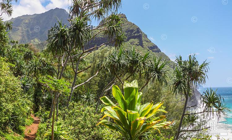 A hiker's view of the Na Pali Coast from the Kalalau Trail near Hanakapi'ai Beach, Kaua'i.