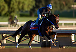 OCT 29: Breeders' Cup Sprint entrant Mitole, trained by Steven M. Asmussen, works at Santa Anita Park in Arcadia, California on Oct 29, 2019. Evers/Eclipse Sportswire/Breeders' Cup