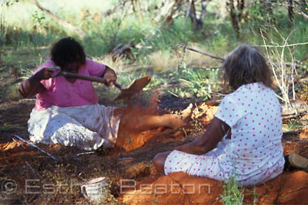 Aboriginal women digging for honeypot ants with digging stick. Eula Range, Northen Territory.