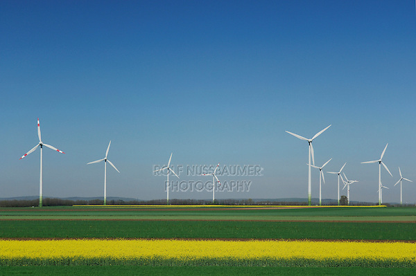 Wind farm and Rapeseed (Brassica napus), Weiden, Burgenland, Austria