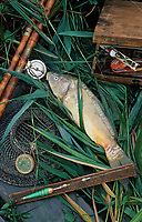 Europe/France/Centre/41/Loir-et-Cher/Sologne: Pêche à la carpe sur un étang