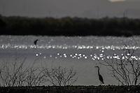 Presa de Hermosillo, Aves