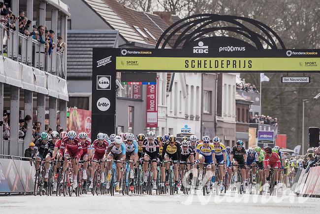 peloton passes the finish line in Schoten with 1 local lap to go<br /> <br /> 105th Scheldeprijs 2017 (1.HC)<br /> 1 Day Race: Mol &rsaquo; Schoten (BEL/202km)