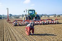 Drilling sugar beet & checking seed placement - Norfolk, March