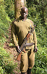 A guard with an AK-47 accompanies every mountain gorilla trek into the jungle of Uganda's Bwindi  Impenetrable Forest, The armed security is a contingency to scare away aggressive elephants in the jungle - elephants flee from gunshot noise when guards fire shots in the air.  The security was also introduced after two tourists were abducted during a trek several years ago.