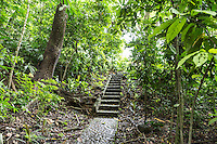 Steps lead down to a spring-fed pool at  Osa Clandestina (aka Hacienda Clandesina), Peninsula de Osa, Puntarenas, Costa Rica. CREDIT: Lisa Corson for The Wall Street Journal     SLUG: OFFGRID-Costa Rica Images are available for editorial licensing, either directly or through Gallery Stock. Some images are available for commercial licensing. Please contact lisa@lisacorsonphotography.com for more information.