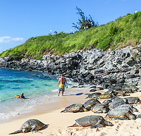 Hawaiian green sea turtles (or honu) rest at Maui's Ho'okipa Beach while people enjoy the sea.