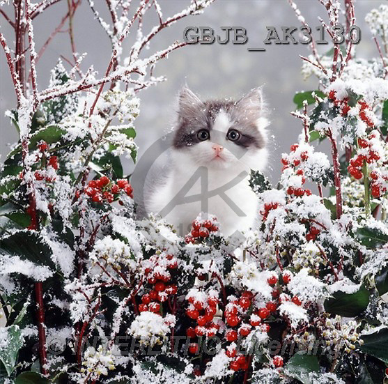 Kim, CHRISTMAS ANIMALS, photos(GBJBAK3130,#XA#)