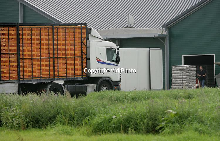 Foto: VidiPhoto..GROESBEEK - Terwijl een Poolse vrachtwagen voor het transport van kippen klaar staat, worden ondertussen de eieren van het bedrijf ingeladen. Een van de grootste kippenfarms van Nederland moet maandag 1 september zijn ontruimd. Het 300.000 kippen tellende pluimveebedrijf Van Deurzen in Groesbeek beschikt niet over een milieuvergunning en heeft geen uitzicht op legalisatie. Dat stelde de Raad van State woensdag. Als het bedrijf de kippen niet verwijdert, moet het een boete van 35.000 euro per week betalen.