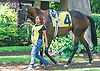 Lil'Zilla in the paddock at Delaware Park on 7/22/15