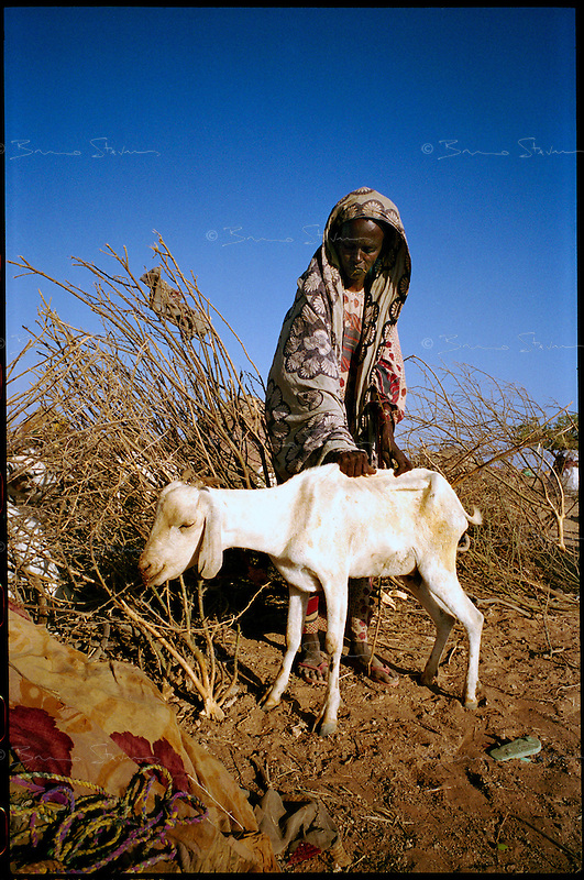 near El Wak, NE Kenya, March 2006.Zeyneb tries to raise one of her last dying goat. El Hachi IDP camp is home to thousands of 'drop-outs', semi-nomadic herdsmen who are leaving the bush to come and live in camps near villages as their livestock is decimated by a persistent drought, abandonning their traditional lifestyle.