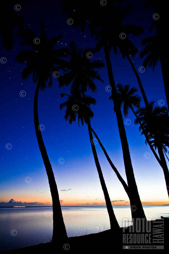 Palm tree grove at sunset, King Kamehameha's royal Kapuaiwa Coconut Grove, just west of Kaunakakai, Molokai, Hawaii