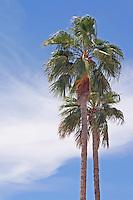 Images of Phoenix, AZ