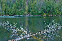 Fallen trees in northern lake<br />