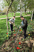 Gardener Joe Ambrosino and volunteer Eric Haynes working at Meanwhile Gardens, North Kensington.