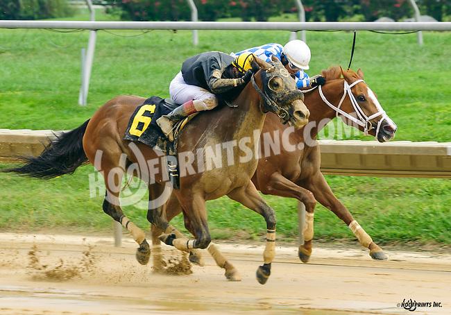 Chilly Start winning at Delaware Park on 9/1/16