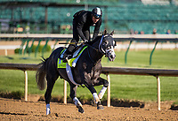 LOUISVILLE, KY - MAY 02: Tapwrit gallops at Churchill Downs on May 02, 2017 in Louisville, Kentucky. (Photo by Alex Evers/Eclipse Sportswire/Getty Images)