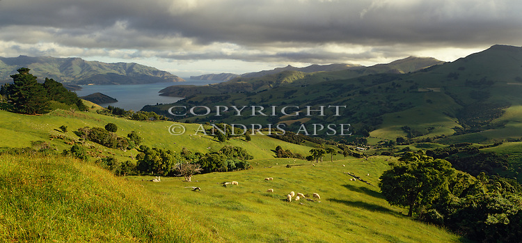 Sheep farming on Banks Peninsula. Canterbury Region. New Zealand.