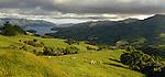 Sheep farming on Banks Peninsula. Canterbury Region. New Zealand.