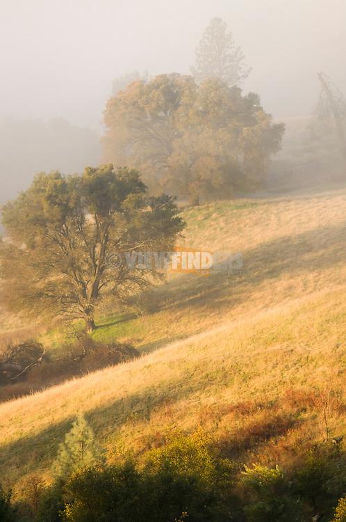 Landscape in the Coloma Valley, California.