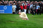 Justin Rose plays from the bunker on the 1th hole in the third round of the BMW PGA Championship on the 26th of May 2007 at the Wentworth Golf Club, Surrey, England. (Photo by Manus O'Reilly/NEWSFILE)