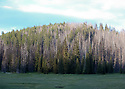 Mountain forest and meadow at Blewett Pass, WA, in the Wenatchee Mountains. Stock photography by Olympic Photo Group