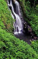 Beautiful cascading waterfall on the lush Hamakua Coast of the Big Island of Hawaii.