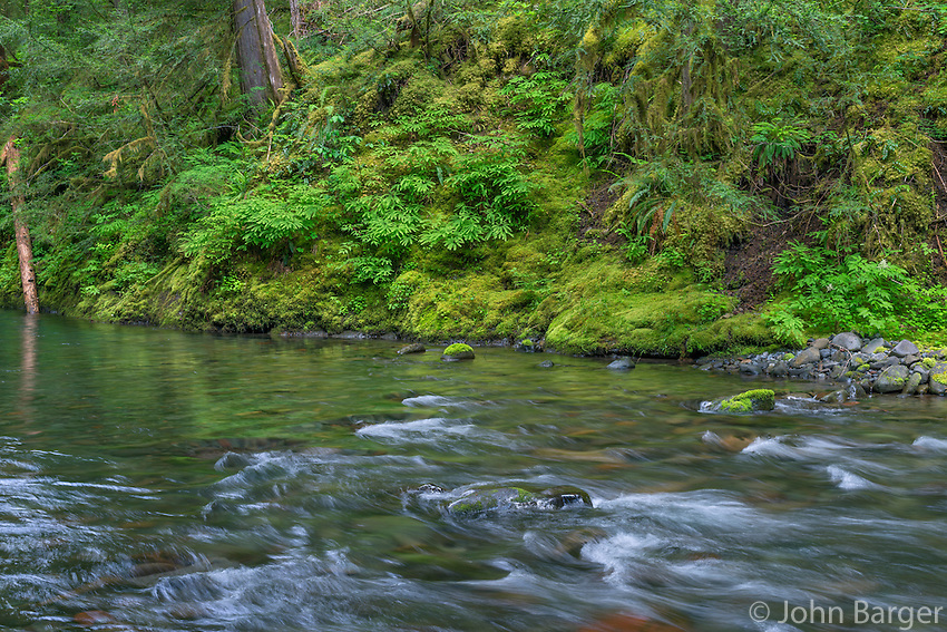 ORCAN_D142 - USA, Oregon, Willamette National Forest, South Fork Breitenbush River and lush old growth forest in spring.