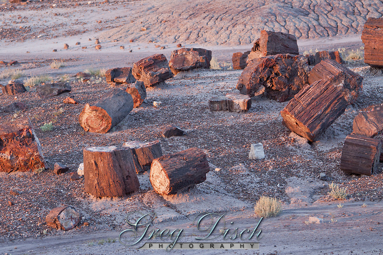 Petrified wood in the Petrified Forest National Park<br /> <br /> With one of the world's largest and most colorful concentrations of petrified wood, multi-hued badlands of the Painted Desert, historic structures, archeological sites, and displays of over 200-million-year-old fossils, this is a surprising land of scenic wonders and fascinating science.