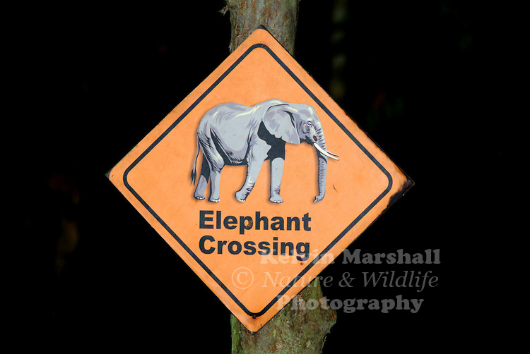 An elephant crossing sign at a crossing on a pathway at Sukau rainforest reserve, elephants have the right of way on the Kinabatangan river.