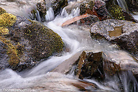 Water snakes around moss covered rocks in Killen Creek.