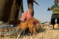 Africa, Sudan, Magwi County, Nimule, Southern Sudan - Killing a chicken. December 2005 © Stephen Blake Farrington
