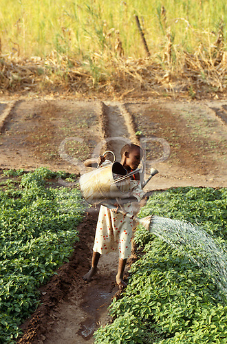 Tabora, Tanzania. Girl watering her family's crops with a galvanised watering can.