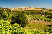 Vineyards and hills dominate the Los Carneros region of southern Napa and Sonoma Counties in California