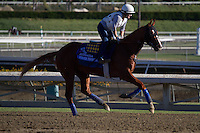 Power Broker galloping for trainer Bob Baffert at Santa Anita Park in Arcadia California