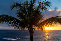 Palm tree and sunset. Piopu, Kauai, Hawaii