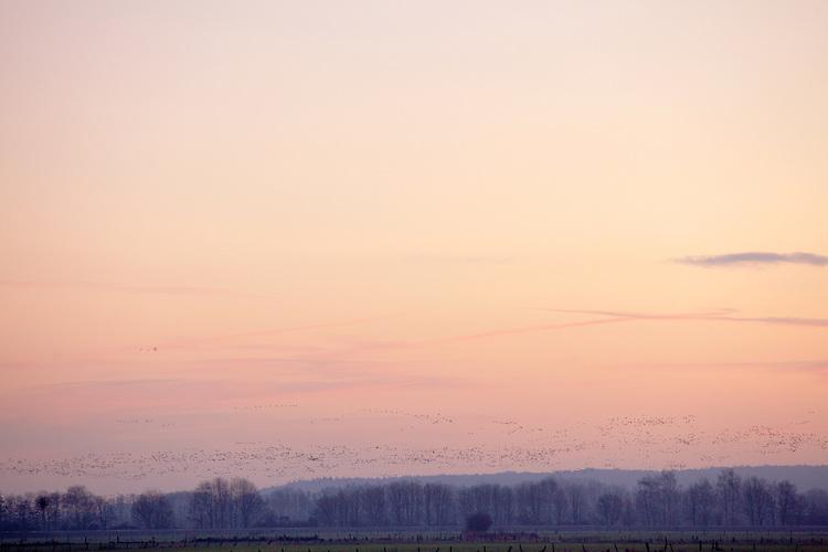 Europa, DEU, Deutschland, Nordrhein Westfalen, NRW, Rheinland, Niederrhein, Kranenburg, Arktische Wildgaense, Naturschutzgebiet Dueffel, Morgens, Daemmerung, , Kategorien und Themen, Tiere, Tier, Wildtiere, Tierfoto, Tierfotos, Tierphoto, Tierphotos, Tierfotografie, Tierphotographie, Wildlife, Natur, Naturfoto, Naturfotos, Naturfotografie, Naturphoto, Naturphotographie......[Fuer die Nutzung gelten die jeweils gueltigen Allgemeinen Liefer-und Geschaeftsbedingungen. Nutzung nur gegen Verwendungsmeldung und Nachweis. Download der AGB unter http://www.image-box.com oder werden auf Anfrage zugesendet. Freigabe ist vorher erforderlich. Jede Nutzung des Fotos ist honorarpflichtig gemaess derzeit gueltiger MFM Liste - Kontakt, Uwe Schmid-Fotografie, Duisburg, Tel. (+49).2065.677997, archiv@image-box.com, www.image-box.com]