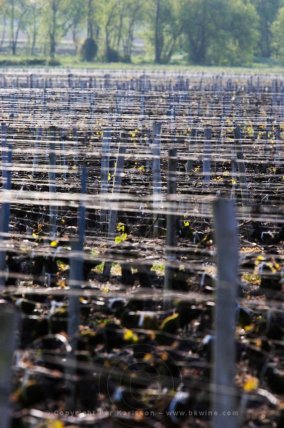 vineyard and wires clos des quatre vents margaux medoc bordeaux france