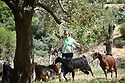 A PIECE OF JORDAN - TRAVEL FEATURE. GOAT HERDING WITH MOSA'AD NASARAT . PHOTO BY CLARE KENDALL. 07971 477316.