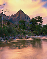 Sunset light above the Virgin River and The Watchman in Zion Canyon; Zion National Park, UT