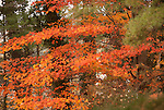 Abstract Fall Colors
