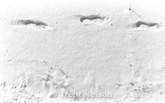 Footprints in snow at old Junior High School.<br />