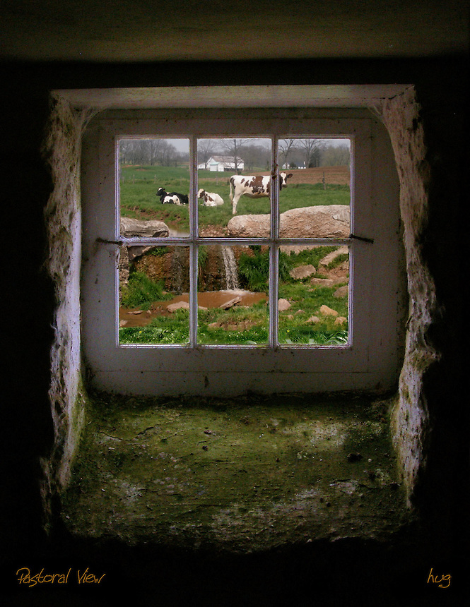 A barn window's view of cows and farm
