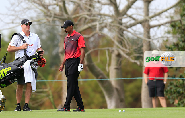 Tiger Woods (USA) and Steve Stricker (USA) during round 4 of the Hero World Challenge, Isleworth Golf &amp; Country Club, Windermere, Orlando Florida, USA. 07/12/2014<br /> Picture Fran Caffrey, www.golffile.ie