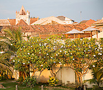 Frangipani blossom trees buildings in historic town of Galle, Sri Lanka, Asia