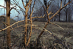 Winter Damage to apple tree by rabbits or rodents<br />